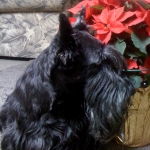 My Scottie, Ti